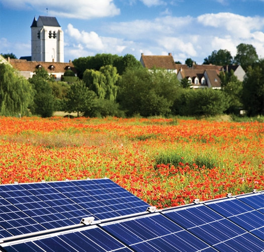 Solar energy panels in a field of flowers with architecture and bushes in the distance.